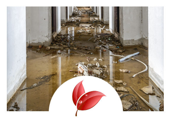 flood and disaster recovery cleaning